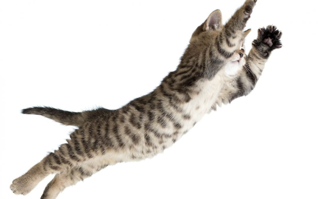 Feline Physiology: Cats' Ability to Jump, Fall, and Defy Gravity