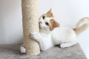 Declawing Cats | Dr Marty Pets