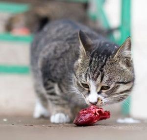 Obligate Carnivore | Dr Marty