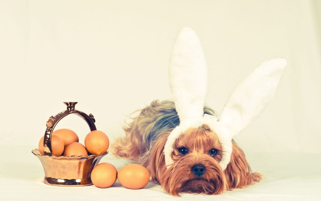 Human Food For Dogs: Can Dogs Eat Eggs?