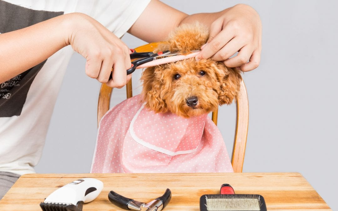 What is a Puppy Cut and Why Is It So Popular?