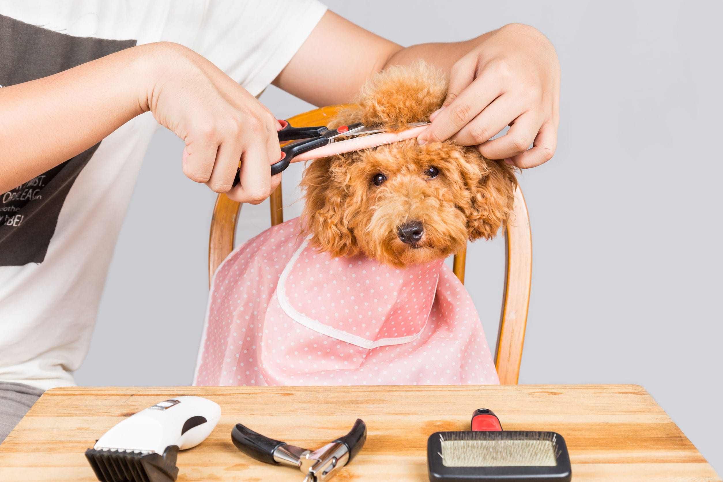 What Is A Puppy Cut And Why Is It So Popular Dr Marty Pets
