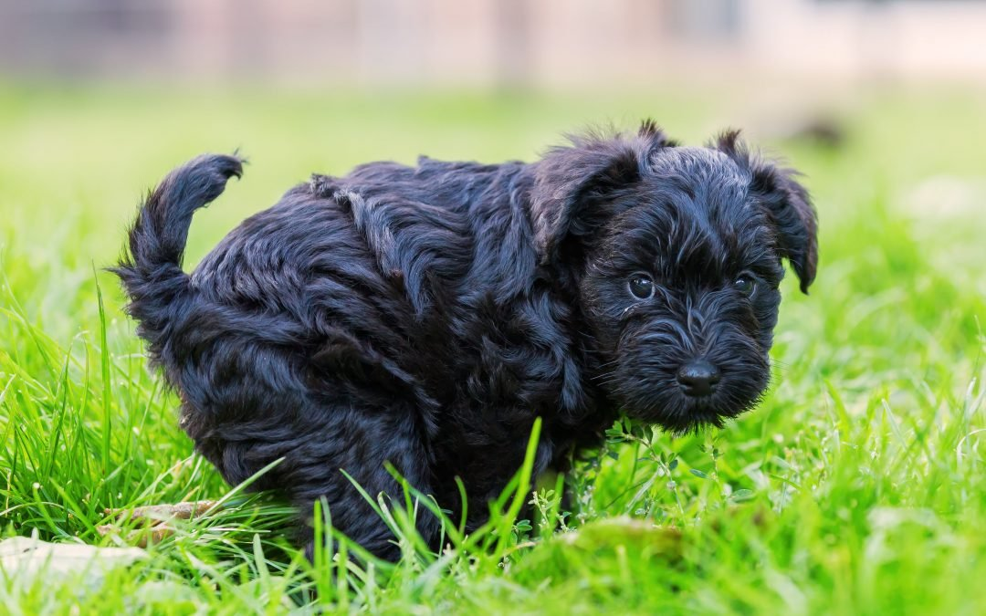 Ultimate Guide to Your Pooch's Poop