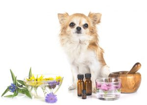 Essential Oils for Dogs | Dr Marty Pets