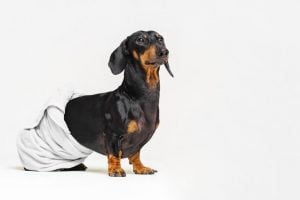 dog muscle spasms   Dr Marty Pets