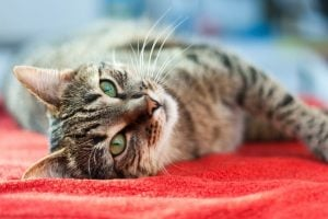 blood in cat stool | Dr Marty Pets