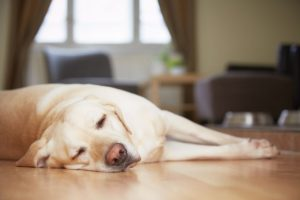 Dog Health | Dr Marty Pets