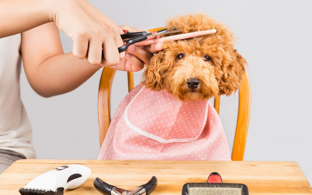 Dog Grooming Tips for the Informed Pet Parent