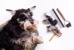 dog grooming | Dr Marty Pets