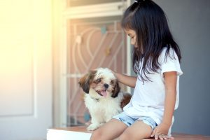 Shih Tzu Temperament | Dr Marty Pets