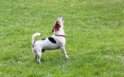 Dog Sounds | Dr Marty Pets