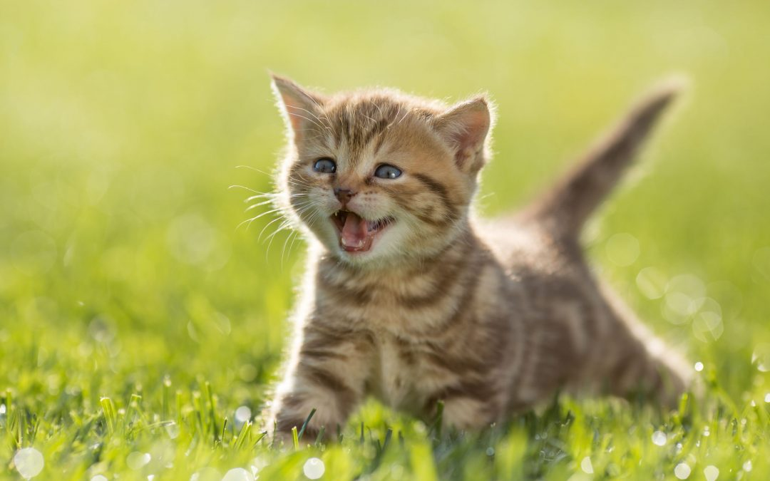 Understanding Cat Sounds – What's Your Cat Telling You?