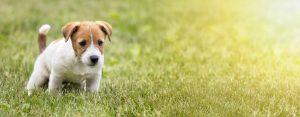 white dog poop | Dr Marty Pets