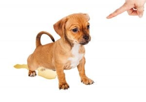 how long does it take to potty train a puppy | Dr Marty Pets