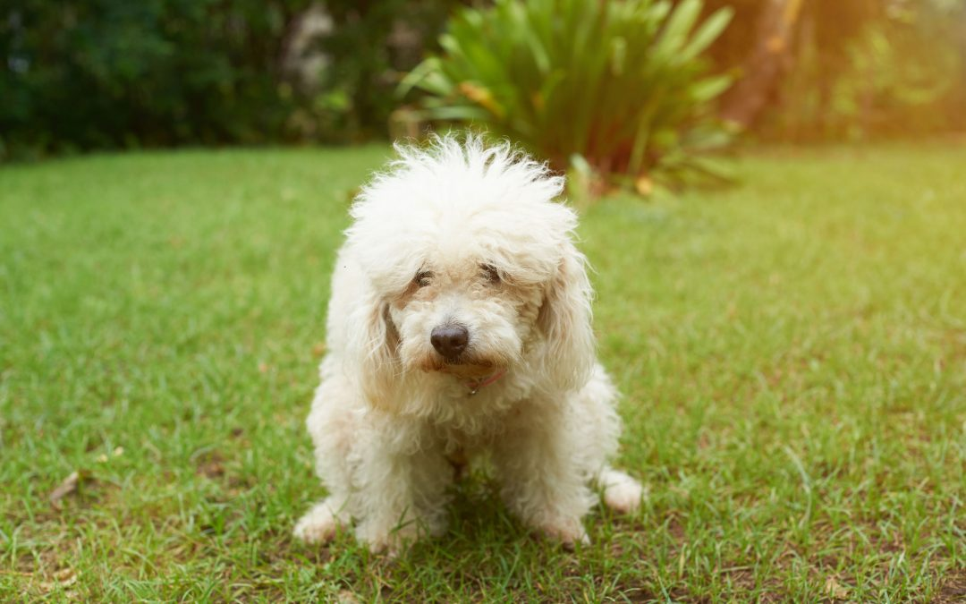 What Does White Dog Poop Tell About Your Pet's Health?