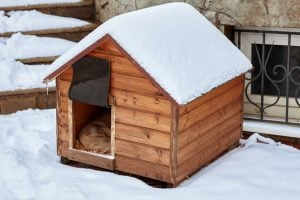 heated insulated dog house | Dr Marty Pets