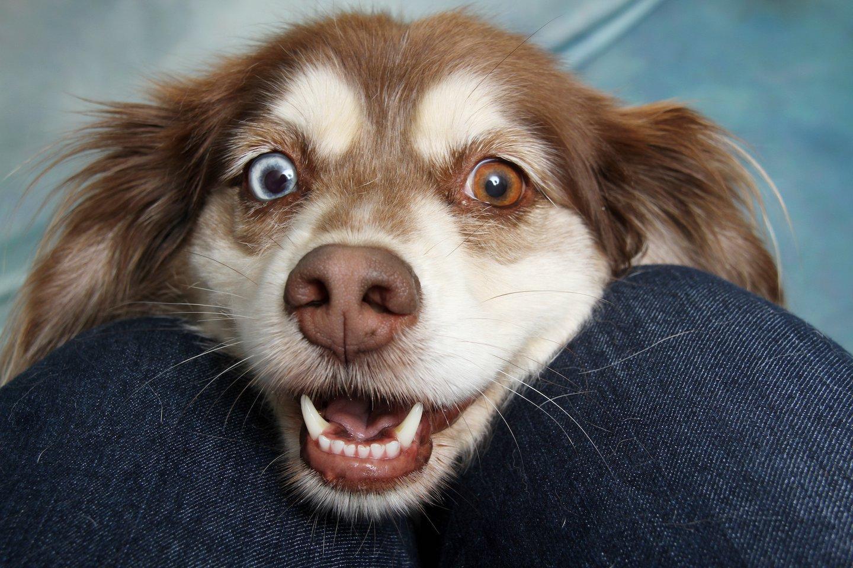dog, happy, treat, recipe, cinnamon