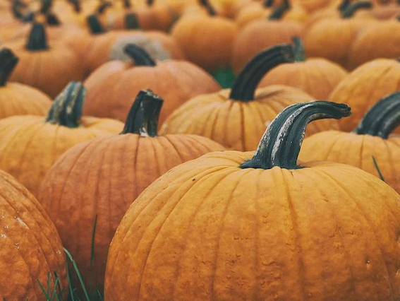 pumpkin, healthy, fresh, raw, veggies, canine-friendly, seasonal