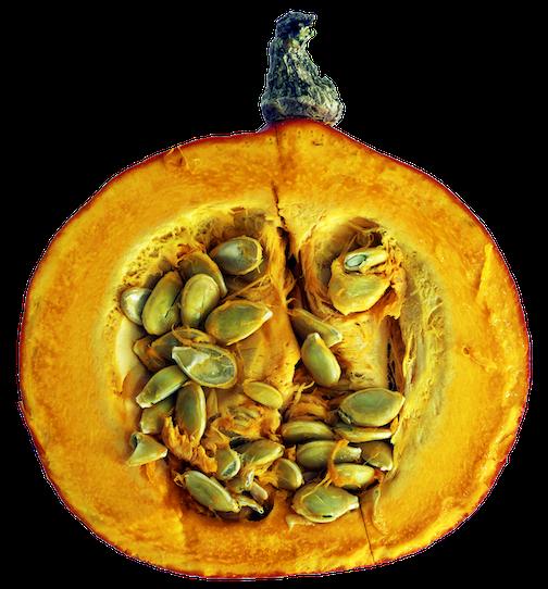 cut pumpkin, sliced pumpkin, pumpkin seeds, fresh, raw, veggies for dogs